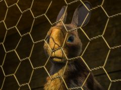 Watership Down features a star-studded cast (BBC/PA)