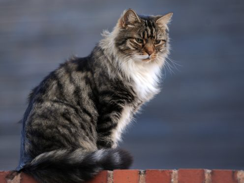 Cat owners are not disproportionately depressed, anxious or alone, new research suggests (Nick Ansell/PA)