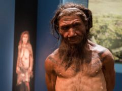 Research suggests Neanderthal extinction could have occurred without environmental pressure or competition with modern humans (Will Oliver/PA)