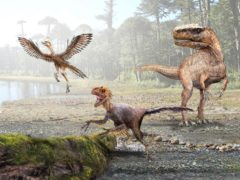 Dinosaurs evolved higher metabolism as they decreased in size to give rise to warm-blooded birds (Mauricio Alvarez/Science Advances)