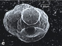 A microhabitat that grew in methane hydrate, dubbed the 'Death Star' by the scientists who worked on the project (University of Aberdeen/PA)