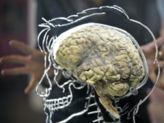 The findings raise hopes for patients with central nervous system injuries where treatment options are limited (Ben Birchall/PA)