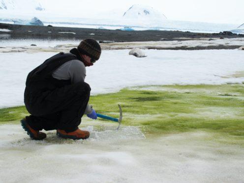 Matt Davey has taken samples of snow algae at Lagoon Island in Antarctica (Sarah Vincent)