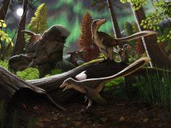 An artist's impression of dromaeosaurid dinosaurs (Andrey Atuchin/Plos One)