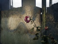 A rose is seen in a burnt barn in Karmiravan village, as ethnic Armenians leave the area prior to the Azerbaijani forces being handed control in the separatist region of Nagorno-Karabakh (AP)