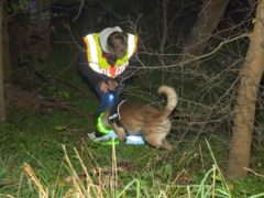 A policeman with a tracker dog during the search for the then missing man in Berlin (Telenewsnetwork/dpa via AP)