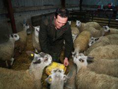 Sheep farming faces 'man-made' EU tariff disaster with no-deal Brexit (Owen Humphreys/PA)