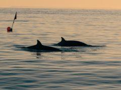 (Sea Shepherd/CONANP)