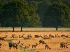 Deer in Richmond Park, south-west London (John Walton/PA)