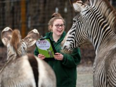 Undated handout photo issued by Marwell Zoo of keeper Zoe Newnham with the zebras, as keepers across the zoo have been taking stock of the thousands of animals cared for there despite the challenges of being closed to the public because of the Covid-19 restrictions.