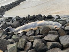 A 32ft sperm whale washed up dead at Sheringham on the north Norfolk coast (Jason Tooke/ PA)