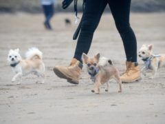 Dog owners are being warned that organised criminals have turned to pet theft during the pandemic (Ben Birchall/PA)
