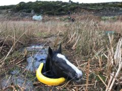 Horse recovery (RSPCA/PA)