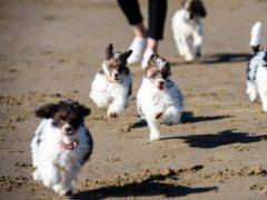 Puppies (Ben Birchall/PA)