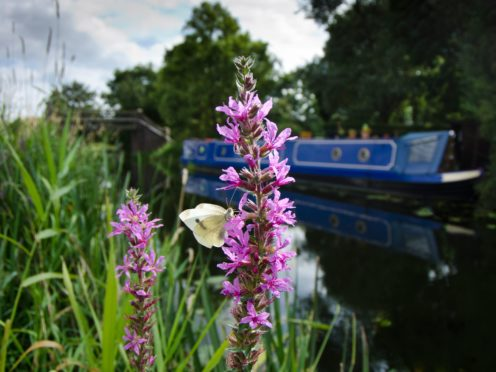 The Canal and River Trust is planning a trial to reduce mowing on waterways for wildlife (Canal and River Trust/PA)