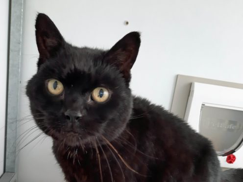 Jess was reunited with his family (Cats Protection/PA)