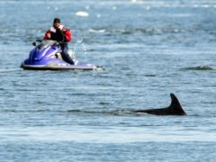 People are being warned over disturbance to dolphins on the UK coasts (Whale and Dolphin Conservation/C Phillips/PA)