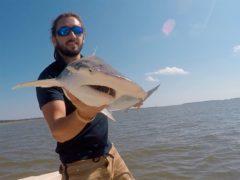 Marine policy specialist Bryan Keller holding a bonnethead shark (Bryan Keller via AP)