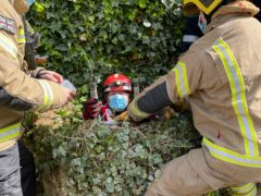 Flea was rescued from a well (NorthamptonshireFire and Rescue Service/PA)