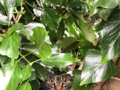Oriole and her kittens were found living in a bird's nest in a tree in Amersham (Cats Protection/PA)
