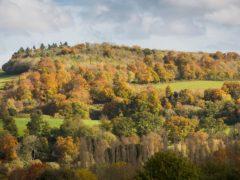 Wooded landscape at Basildon Park, Berkshire (National Trust/PA)