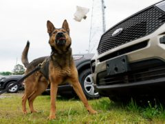 Virginia State Police K-9, Aries (AP)