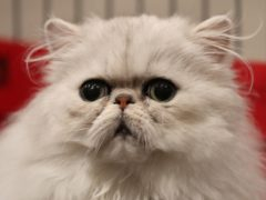 The cat food has been linked to cases of pancytopenia in cats (Andrew Milligan/PA)
