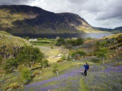 There are calls to make Britain's national parks wilder to curb nature loss (Owen Humphreys/PA)
