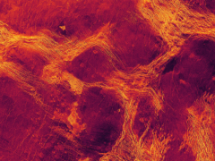 The surface of Venus is moving like pack ice on a lake, research suggests (NC State University, based upon original NASA/JPL imagery)