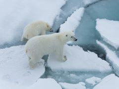 Scientists say Arctic sea ice in coastal regions may be thinning up to twice as fast as previously thought (Alfred-Wegener-Institut/PA)