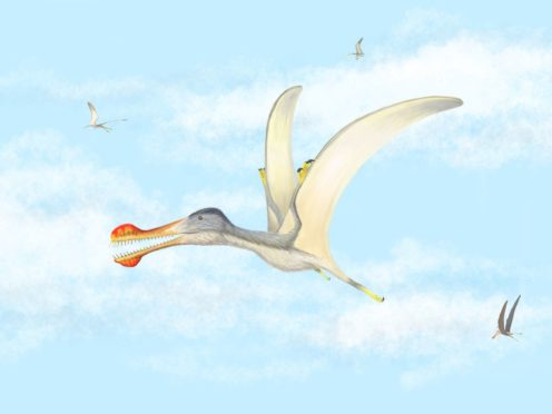 Newly-hatched pterosaurs may have been able to fly, according to scientists (University of Portsmouth/PA)