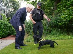 Prime Minister Boris Johnson speaks to Sergeant Dog Handler Mike Barnes as he throws a ball for six year old cocker spaniel Rebel, a proactive drugs dog, during a visit to Surrey Police headquarters in Guildford, Surrey, to coincide with the publication of the government's Beating Crime Plan. Picture date: Tuesday July 27, 2021.