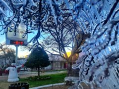 Ice covers trees at dawn during a cold snap in Sao Joaquim, Brazil (Mycchel Legnaghi/AP)