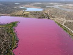 The waters of the Corfo lagoon are pink in Trelew, Chubut province, Argentina (Daniel Feldman/AP)