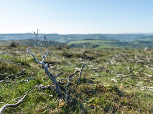 Rewilding Britain claim that a tenth of national park land is being intensively managed for the purpose of raising grouse (Sam Rose/ Rewilding Britain)