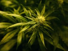 Research suggests that babies born to people who regularly used cannabis during their teenage years may be more likely to be premature and of low birthweight (Gareth Fuller/PA)