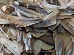 Shark fins (Cefas/PA)