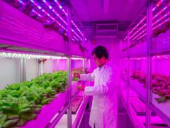 New vertical farms will tackle global food challenges, researchers hope (Nottingham Trent University/PA)