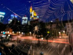A spider hangs in its web with the buildings of the banking district in the background in Frankfurt, Germany (Michael Probst/AP)