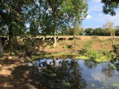 Exmoor ponies graze land as part of Wild Ken Hill's rewilding project (Emily Beament/PA)
