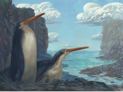 Schoolchildren discovered a new penguin species (Simone Giovanardi/PA)