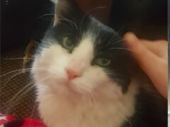 Simba had been living with a lady in Liverpool before returning home to Kelly Pomfret (Cats Protection/PA)