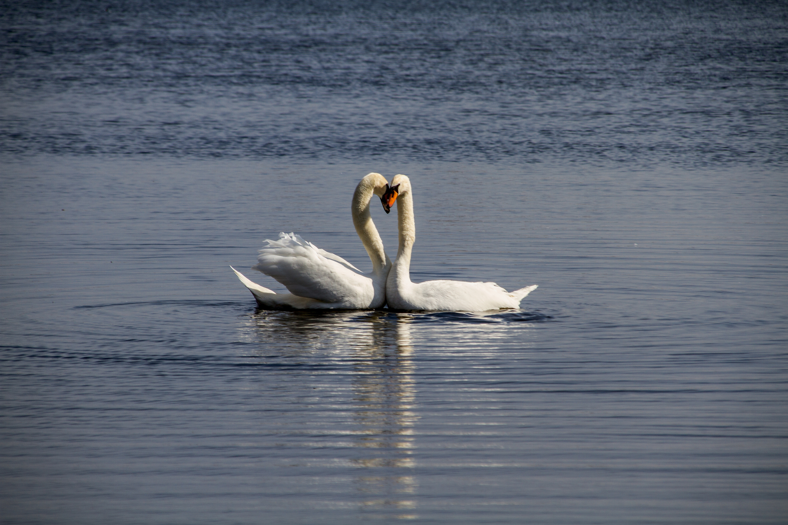 SWAN LAKE: Euan Donegan, of Dundee, captured this lovely scene of swans at Clatto Country Park.