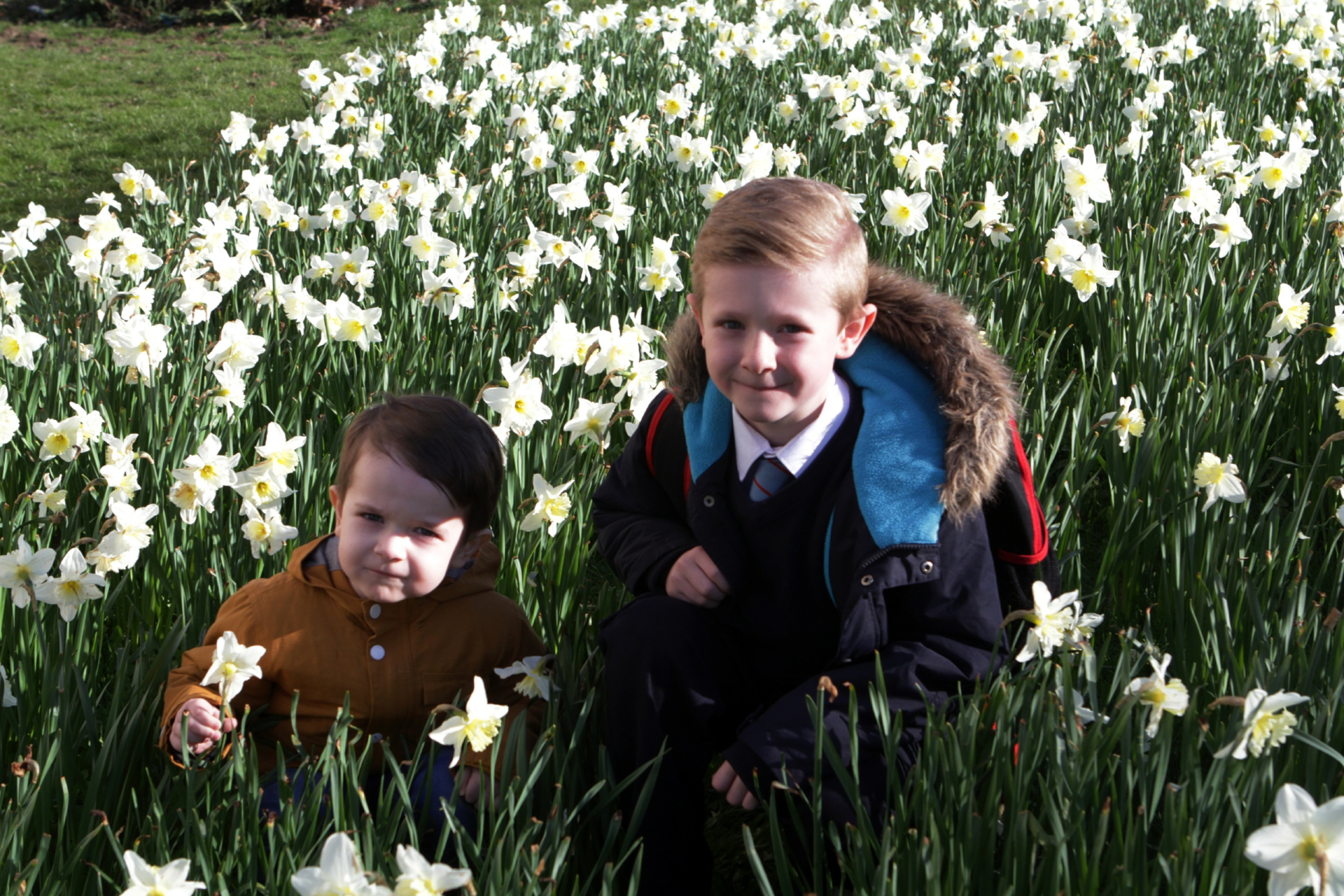 Four-year-old Cole Chambers and seven-year-old Calvin Heenan admire the daffodils on a beautiful spring morning in Menzieshill.
