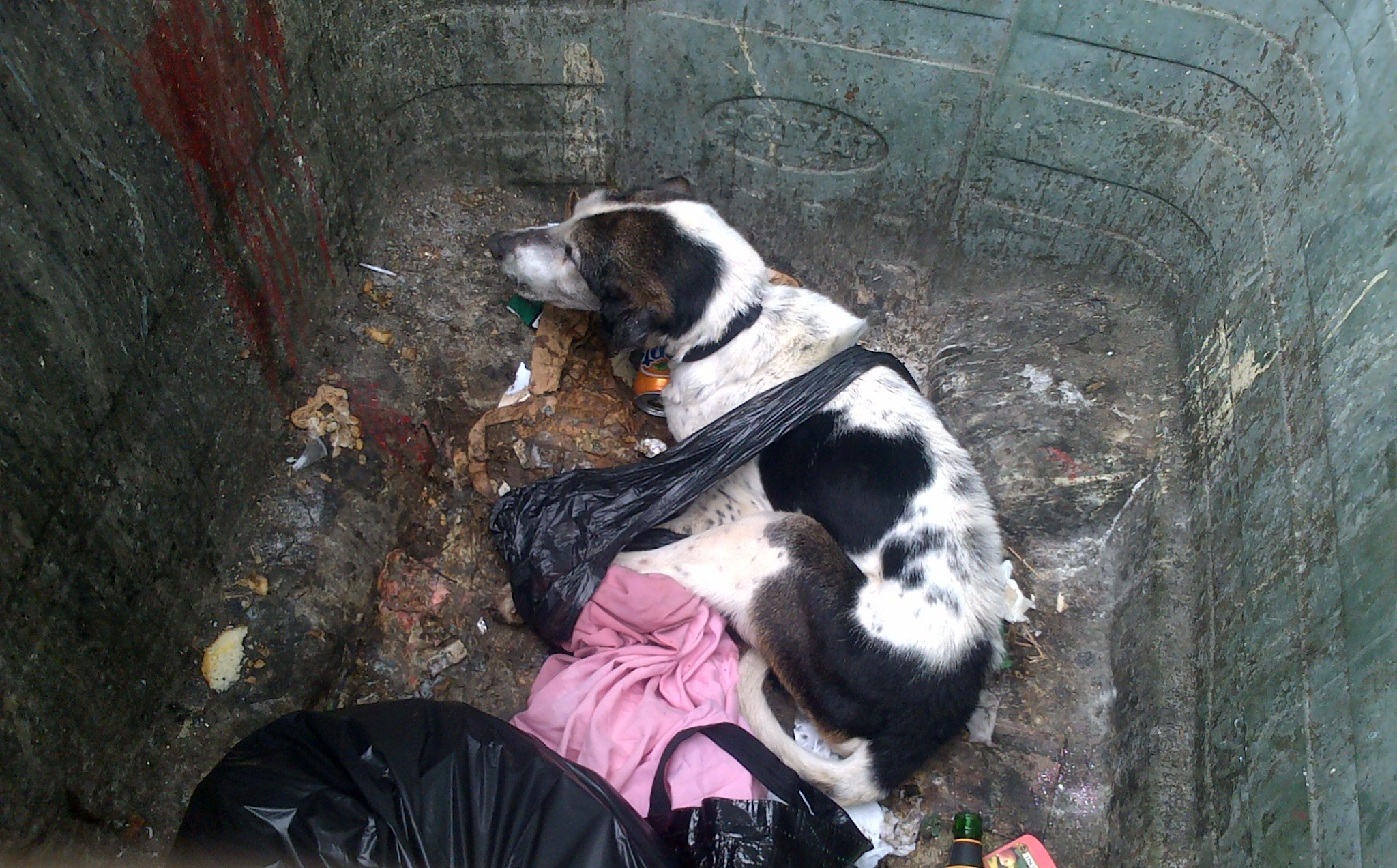 The dog was found alive but later had to be put down
