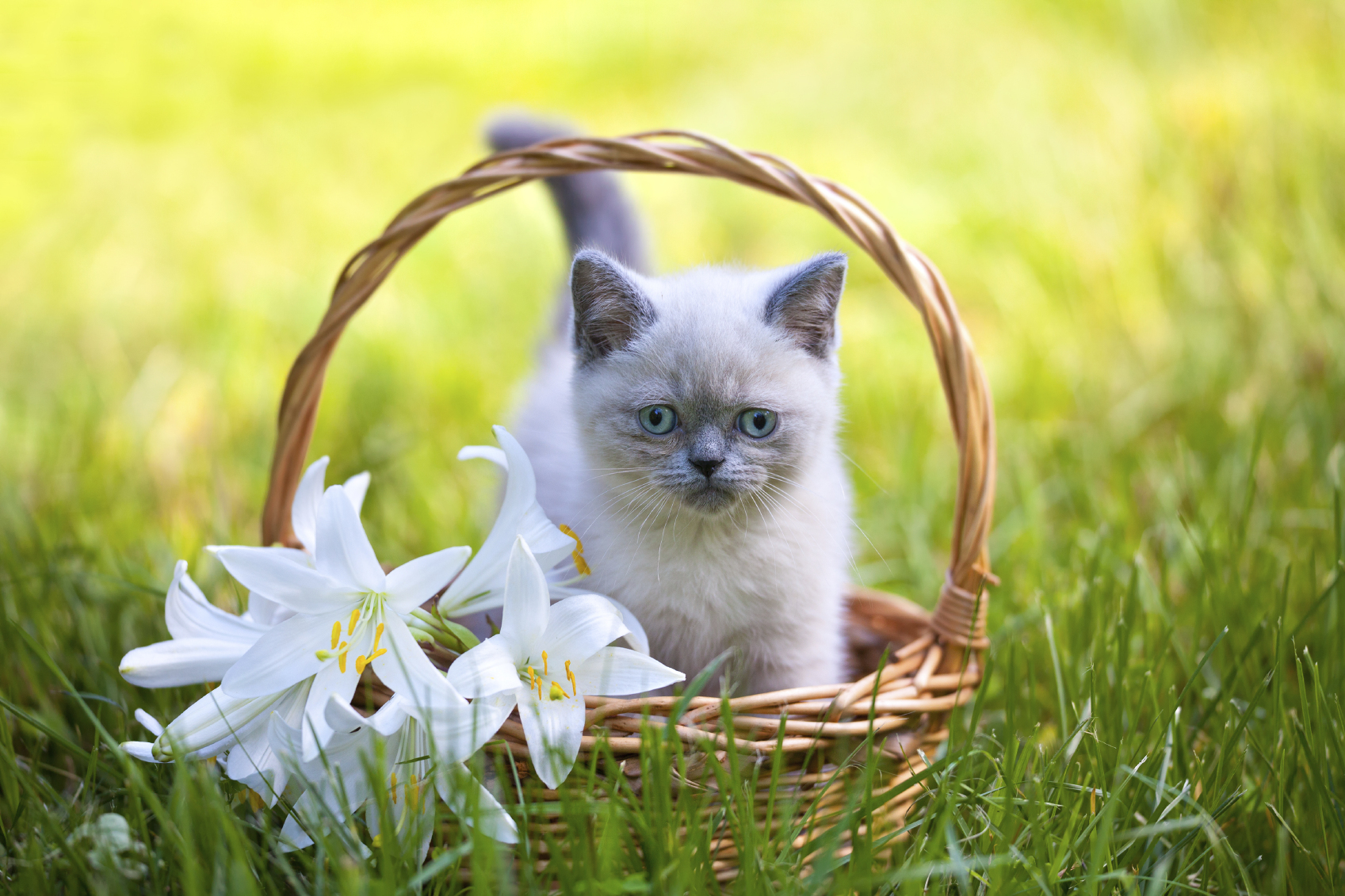 Pet owners are being warned of the dangers household plants could pose to their animals.