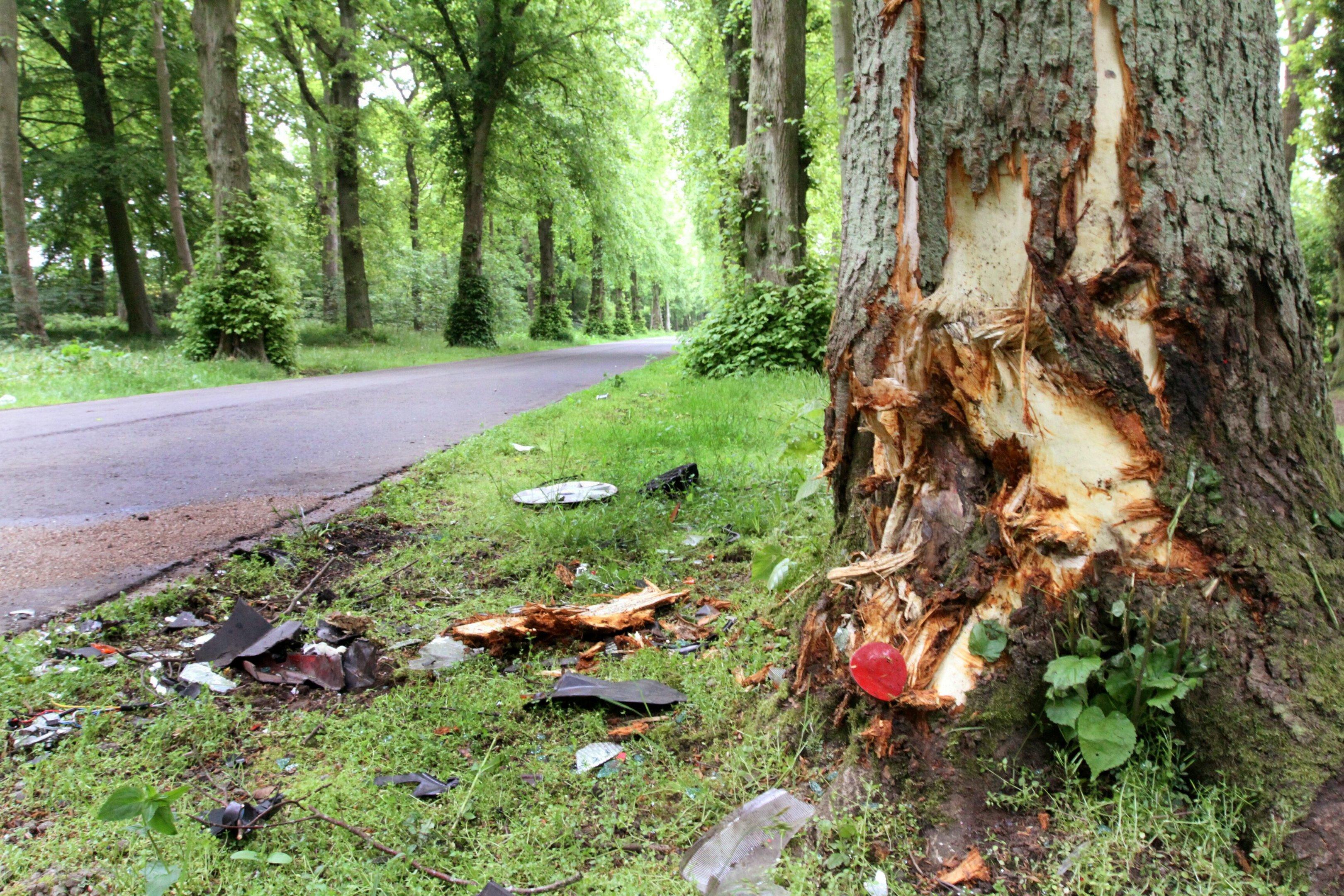 The scene of the crash at Camperdown Park.