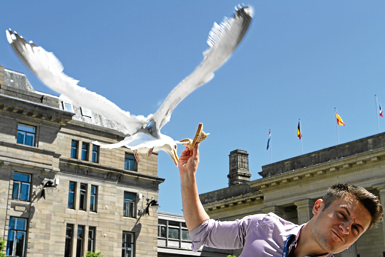 A seagull attacks Elliot Smith