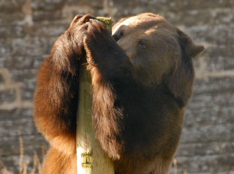 comet hugging scratching post