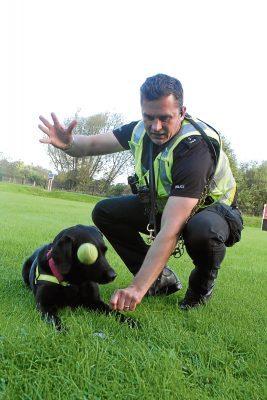 grobs police dogs